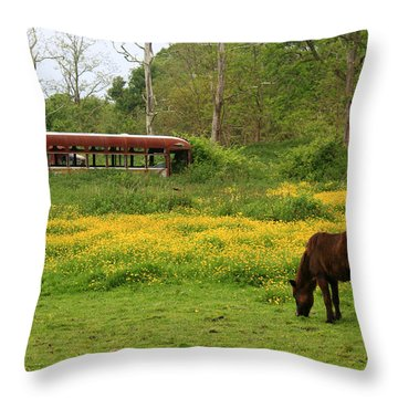 Horse In The Meadow Near Weetamoo Throw Pillow