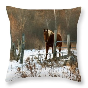 Horse In Winter Throw Pillow by Pat Cook