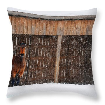 Horse Looking At Snow Storm Throw Pillow by Dan Friend