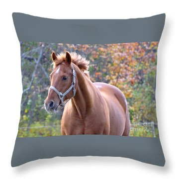 Throw Pillow featuring the photograph Horse Muscle by Glenn Gordon