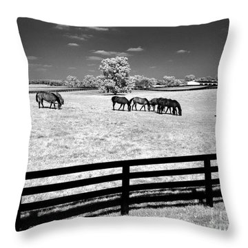 Throw Pillow featuring the photograph Horse Pasture Infrared by Martin Konopacki