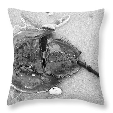 Horseshoe Crab At Red River Beach Cape Cod Throw Pillow by Suzanne Powers