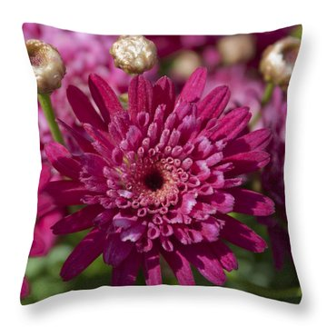 Throw Pillow featuring the photograph Hot Pink Chrysanthemum by Ivete Basso Photography