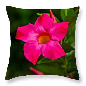 Hot Pink Dipladenia Throw Pillow by Karol Livote