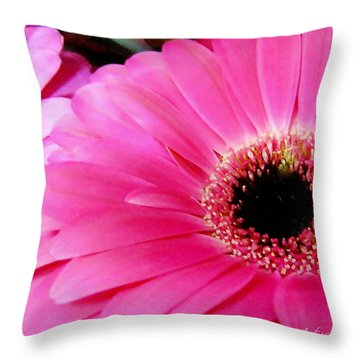 Hot Pink Gerber Daisies Macro Throw Pillow