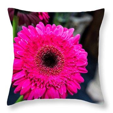 Hot Pink Gerber Daisy Throw Pillow