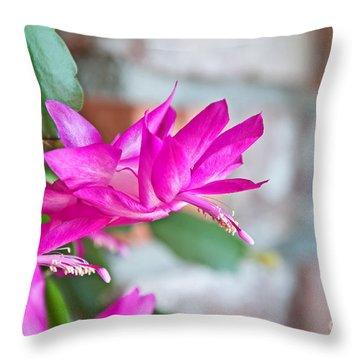 Hot Pink Christmas Cactus Flower Art Prints Throw Pillow