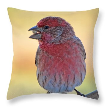 House Finch II Throw Pillow by Debbie Portwood