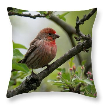 House Finch In Apple Tree Throw Pillow