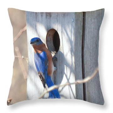 Throw Pillow featuring the photograph House Hunting by Kerri Farley