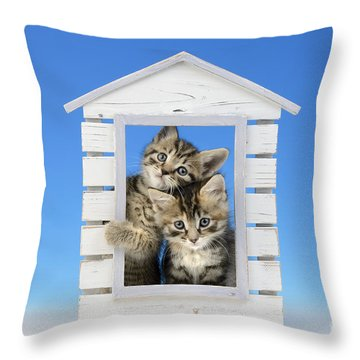 House Of Kittens Ck528 Throw Pillow by Greg Cuddiford
