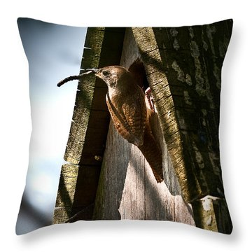 House Wren At Nest Box Throw Pillow