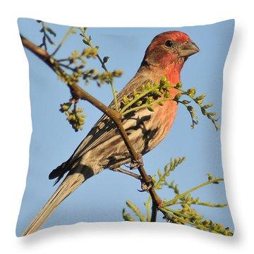 Housefinch 272 Throw Pillow