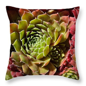Houseleek Group Throw Pillow