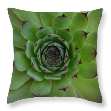 Houseleek Sempervivum Throw Pillow by Scott Lyons