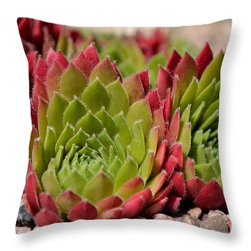 Houseleeks Aka Sempervivum From The Side Throw Pillow