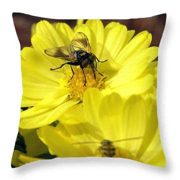 Hoverfly Throw Pillow by Christina Rollo
