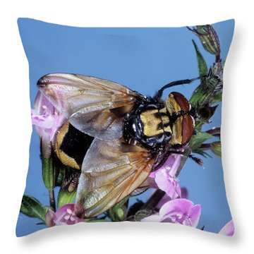 Hoverfly Throw Pillows
