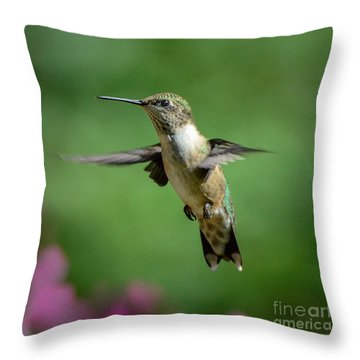 Hovering Hummer Throw Pillow by Amy Porter