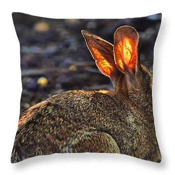 How Bout Them Ears Throw Pillow by Dan Friend