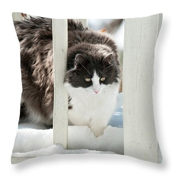 Throw Pillow featuring the photograph How Did This Happen? by Lara Ellis