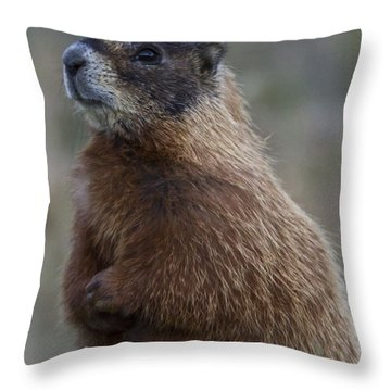 How Much ... Throw Pillow