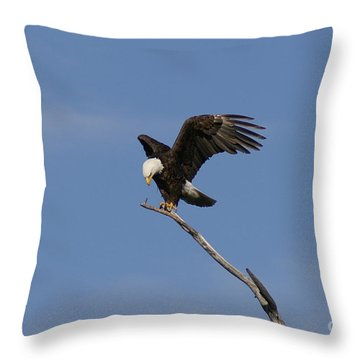 How My Claws Throw Pillow by Lori Tordsen