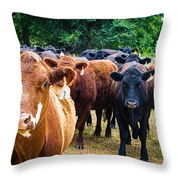 How Now Brown Cow Throw Pillow