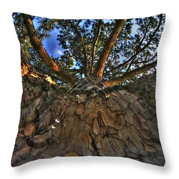 How Sweet It Is Throw Pillow by Michael Frank Jr