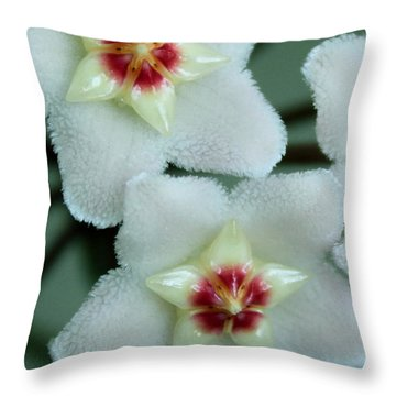 Hoya Throw Pillow by Debbie Hart