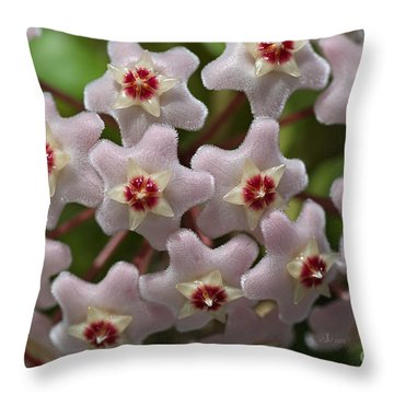 Hoya Waxflower Throw Pillow