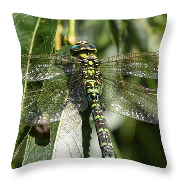 Huge Dragon-fly In Detail. Throw Pillow