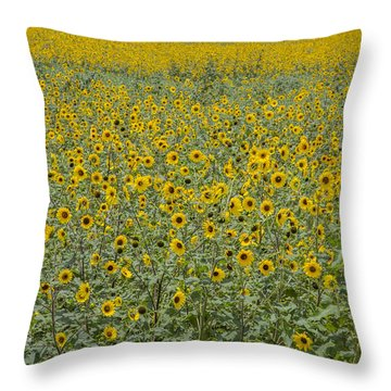Huge Wild Sunflower Colony Throw Pillow