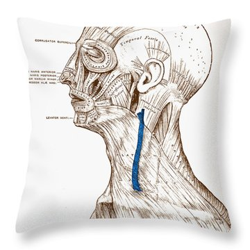 Human Muscular System Throw Pillow by Granger