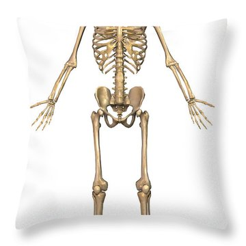 Human Skeletal System, Front View Throw Pillow by Stocktrek Images