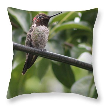 Hummer On A Wire Throw Pillow