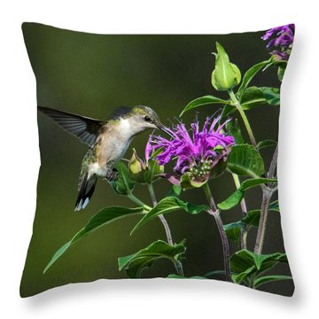 Hummer On Bee Balm Throw Pillow
