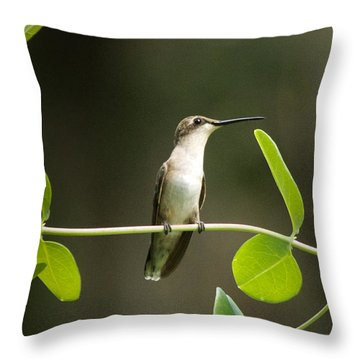 Humming Bird Break Throw Pillow