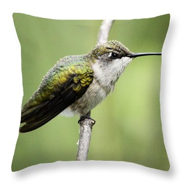 Hummingbird 3 Throw Pillow by Bonfire Photography