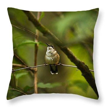 Hummingbird 3 Throw Pillow by Tammy Schneider