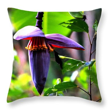 Hummingbird And Banana Tree Throw Pillow