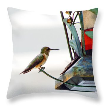Hummingbird At Rest Throw Pillow by Adria Trail