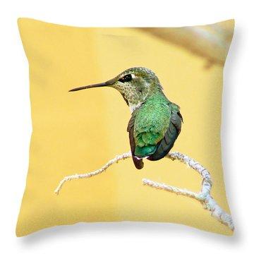 Hummingbird At Rest Throw Pillow