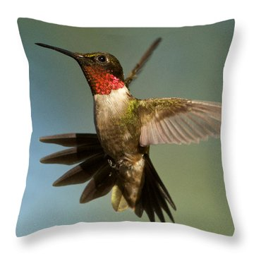 Hummingbird Beauty Throw Pillow