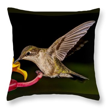 Ruby Throated Hummingbird Throw Pillow by Brian Caldwell