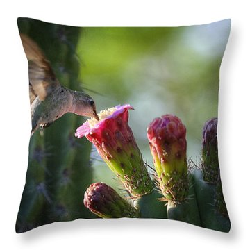 Hummingbird Breakfast Southwest Style  Throw Pillow