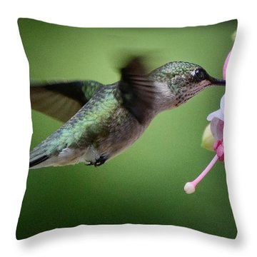Hummingbird Carbs Throw Pillow