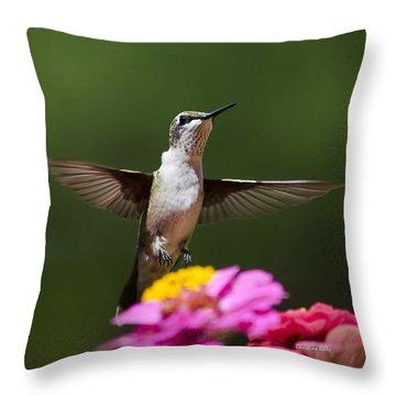 Hummingbird Throw Pillow by Christina Rollo
