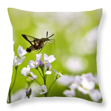 Hummingbird Clearwing Moth Flying Away Throw Pillow