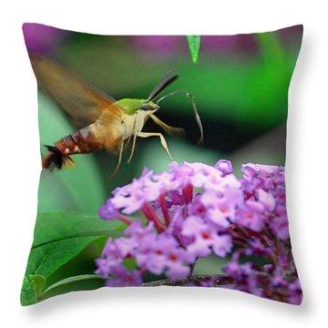 Hummingbird Clearwing Moth Throw Pillow by Gary Keesler